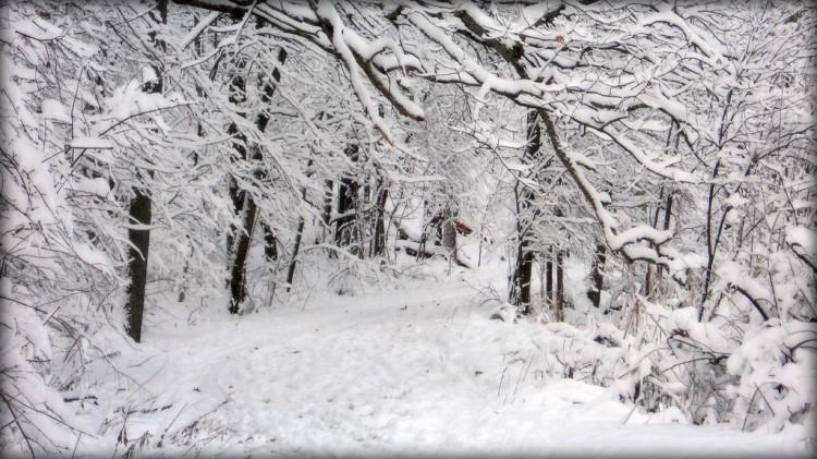 las-zimą